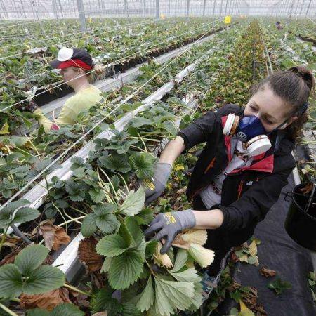 Groei arbeidsmigranten eigen bedrijf Den Haag Polen Bulgarije