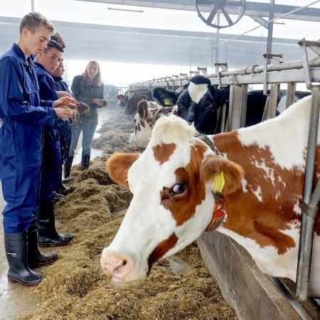 Boeren Helicon ondernemen vee