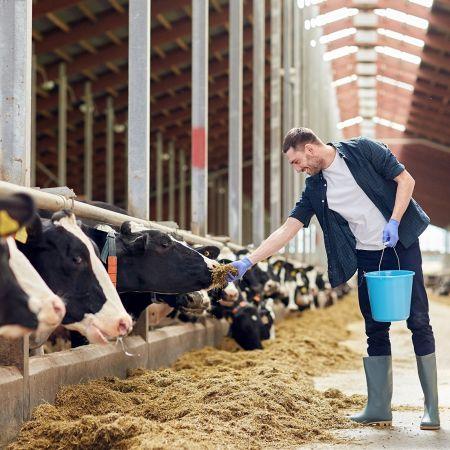 Boeren vlees export cda stikstof