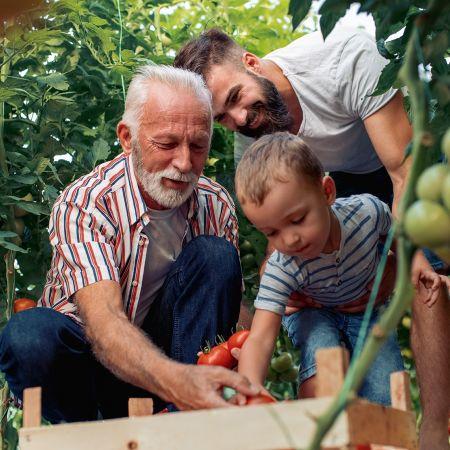 Familiebedrijf tomaten kas belasting