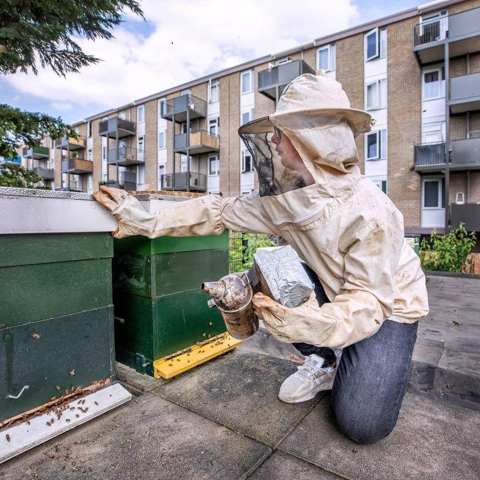 Zoon Ismael Taskan helpt zo nu en dan een handje mee in de Honingwinkel in Utrecht Zoals hier bij de bijenkasten op het dak van de schuur raymond rutting photography