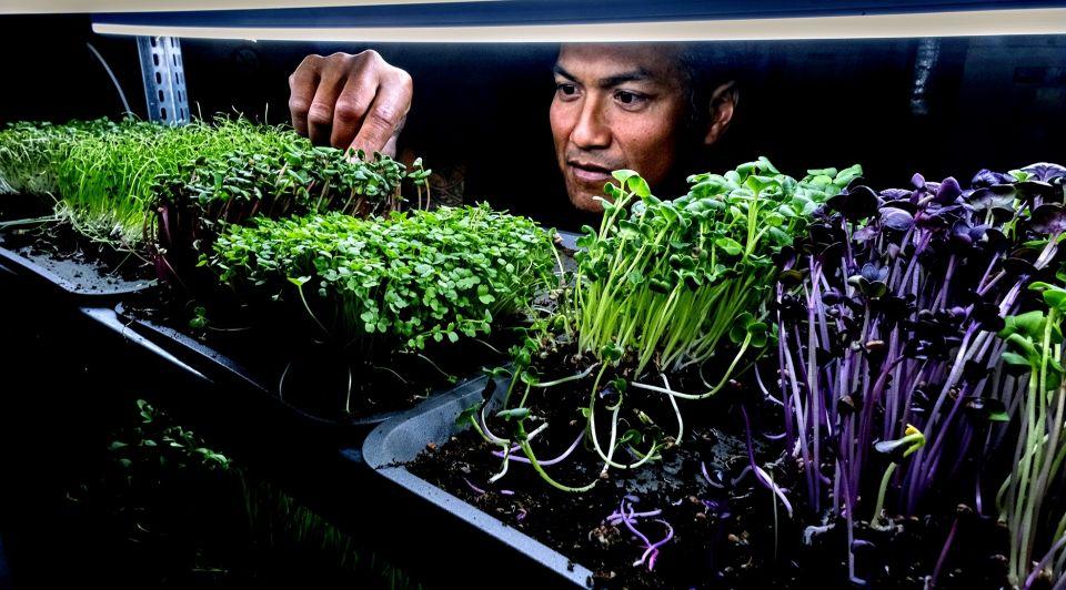 Patrick Asmawidjaja plantjes