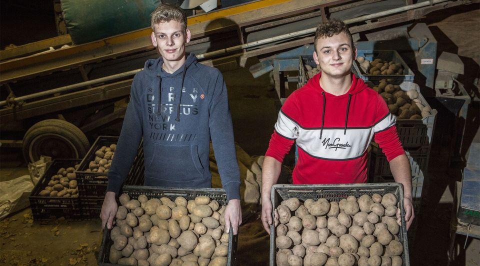 Aardappelen webshop maasdam