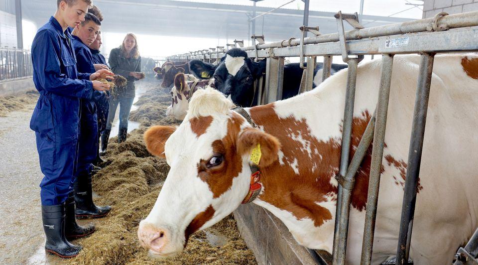 Boeren Helicon ondernemen veeteelt melkvee