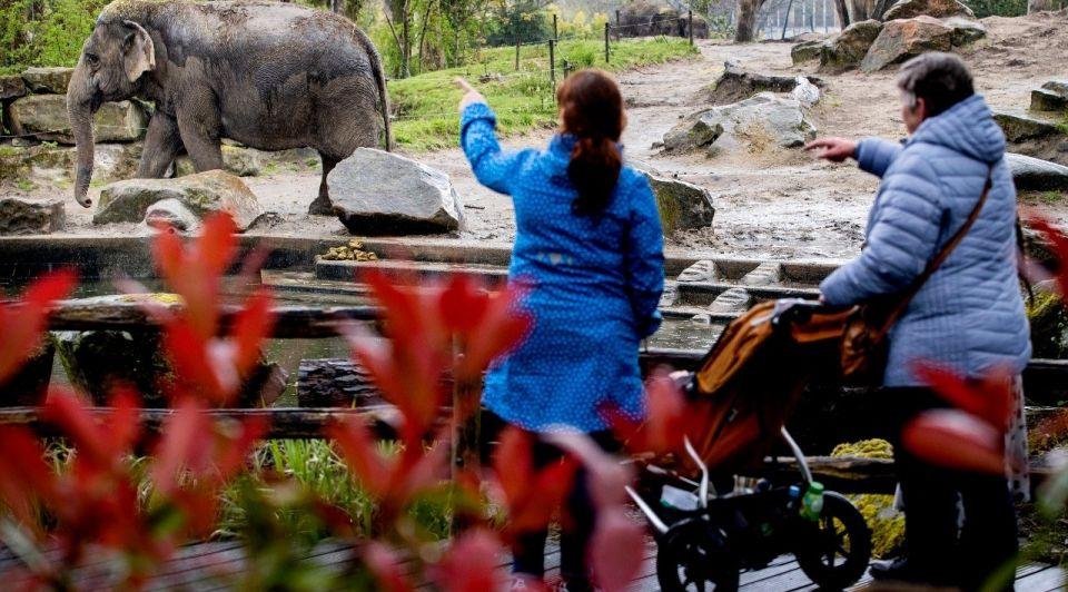 Dierentuin olifant