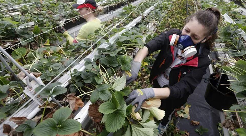 Glastuinbouw nederland tuinders personeel omstandigheden bed brood