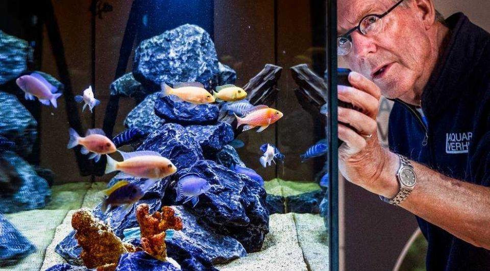 Vissen kantoor aquarium lease kantoortuin erik rood Aquarium Verhuur