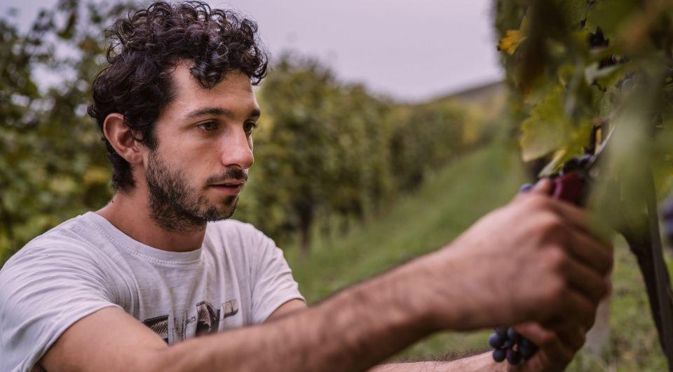 Wijn boer wijngaard druiventros