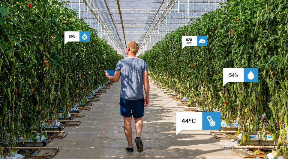 Teler data groei groente