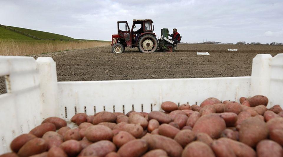 Aardappeltelers Regen