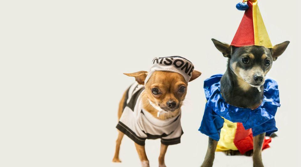 Hipdogs Drunen carnaval