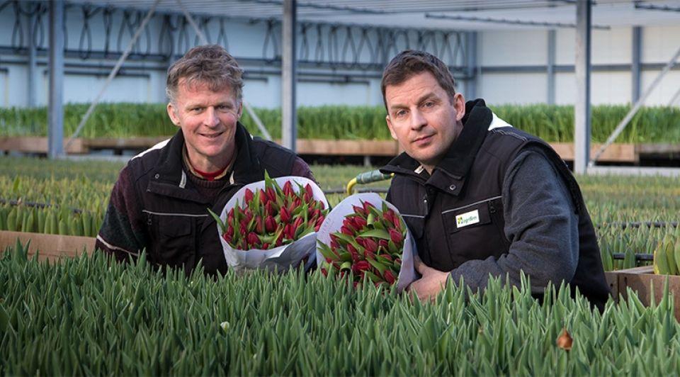 Jeroen en Sander Litjens Tulpen Creil Flevoland Countus tulp Bloembollen Vakdagen tulpenbollen