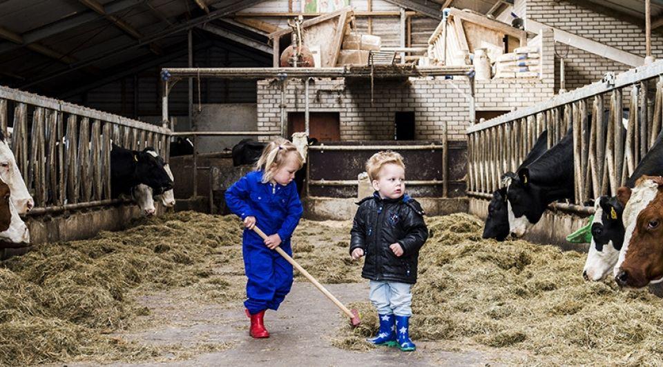 Kinderopvang koeien