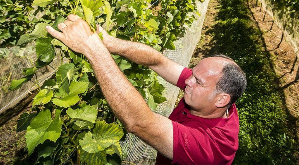 Wijnmakers Brabant