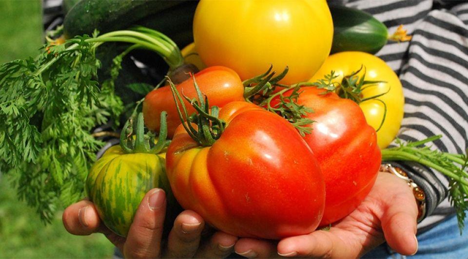 Groente lekker nassuh streekproducten