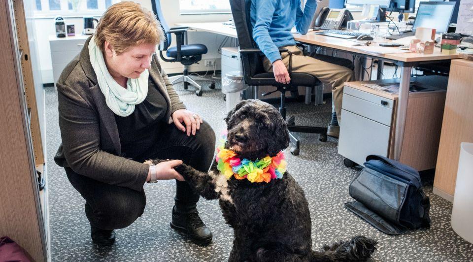 Hond personeelslid werkplek Pfizer stressverminderend