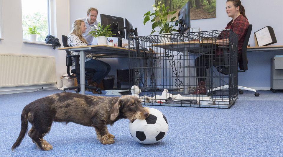 Kantoor hond vloer dier werknemers
