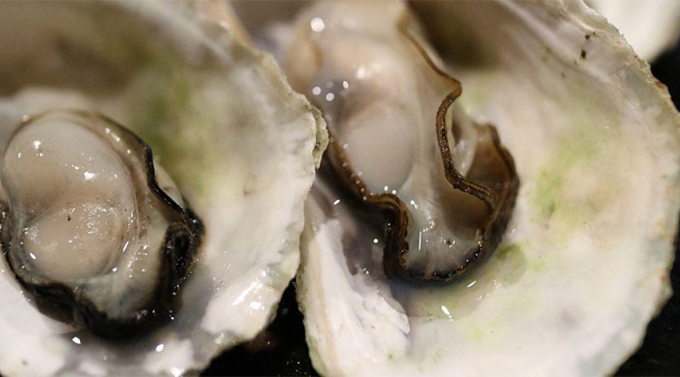 Oesters bubbels yerseke zeeland proeverij schelpdieren zeevruchten