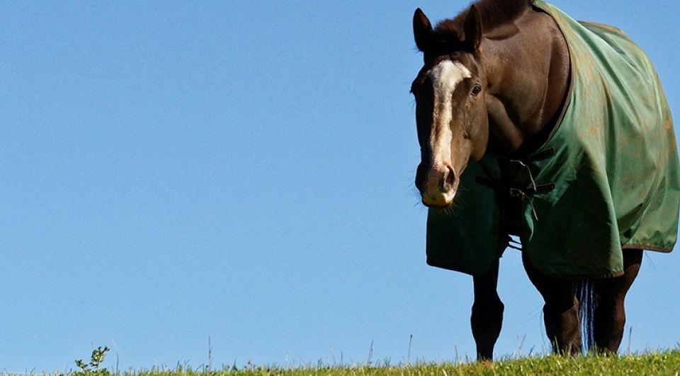 Paardendeken pixabay