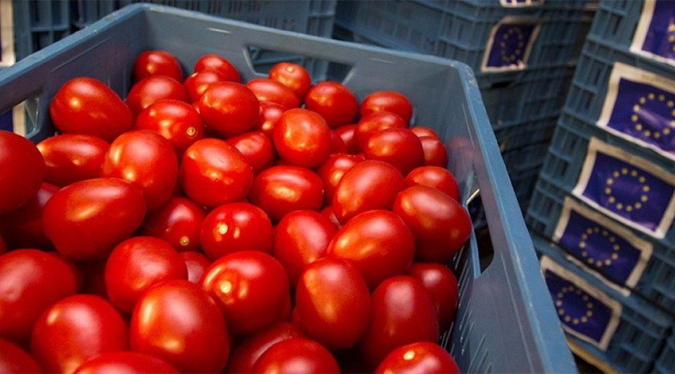 Tomaten kweken bakken